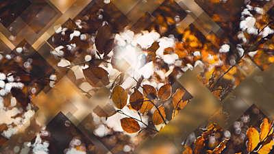 Autumn Journey 01