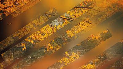 Autumn Journey 09