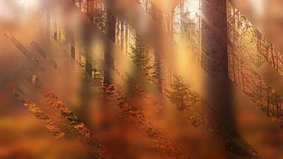 Autumn Journey 11