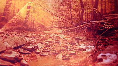 Autumn Oasis Brook Still