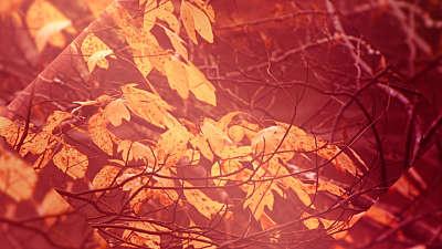 Autumn Oasis Leaves Still