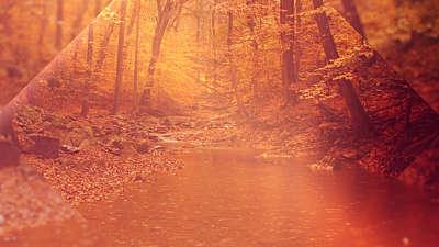Autumn Oasis Stream Still