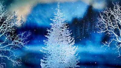 Christmas Woods 13