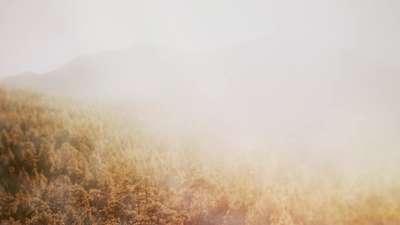 Deep Autumn Foggyshi