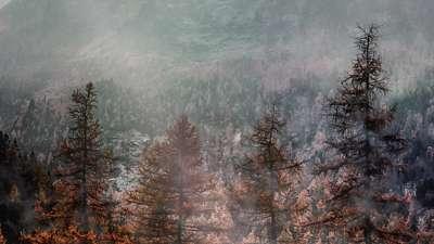 Deep Autumn Treeline