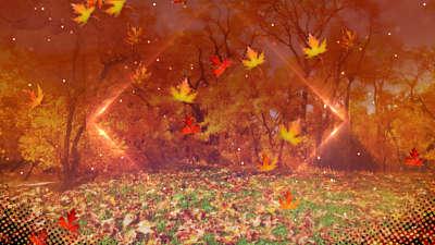 Fall Background Loop Volume 2
