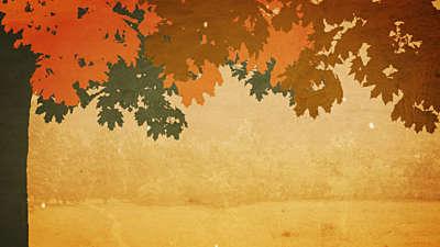 Fall Colors 04