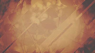 Fall Light 01