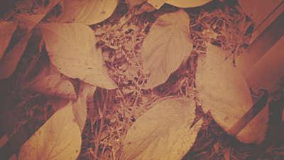 Fall Light 03