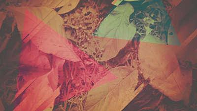 Fall Light 05
