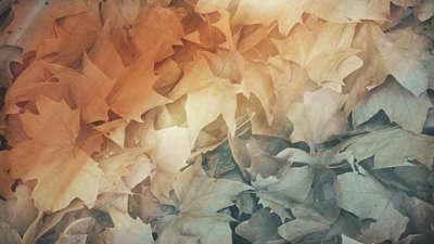 Fallen Leaves 02