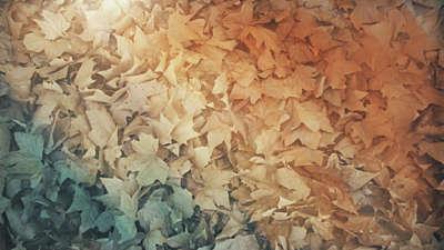 Fallen Leaves 04