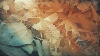 Fallen Leaves 05