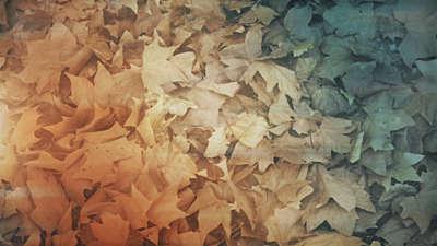 Fallen Leaves 06