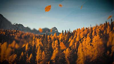 Falling Autumn 4