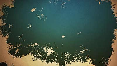 Falling Leaves 04