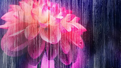 Floral Fusion 4