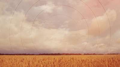 Golden Hour Field Radial