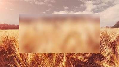 Golden Hour Wheat Alt