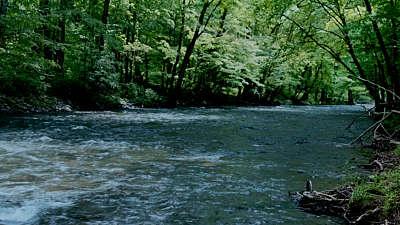 River Wild 12