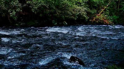 River Wild 14