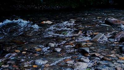 River Wild 17