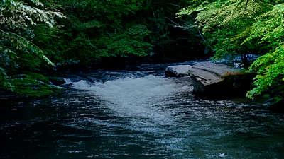 River Wild 2