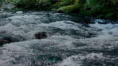 River Wild 3