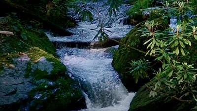 River Wild 5