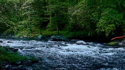 River Wild 8