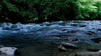 River Wild 9