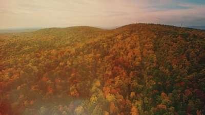 Thanksgiving Flight Autumn