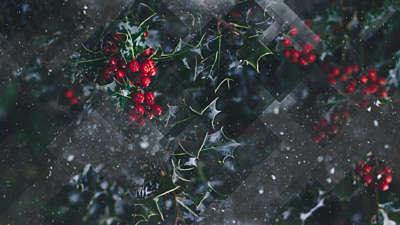 Winter Journey 01