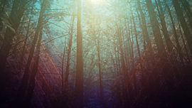 Fall Forest 01