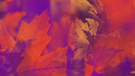 Fall Reflections 07