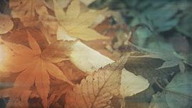 Fallen Leaves 01