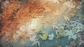 Fallen Leaves 03
