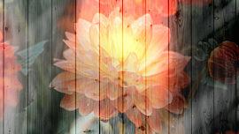 Floral Fusion 1