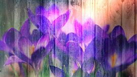 Floral Fusion 3