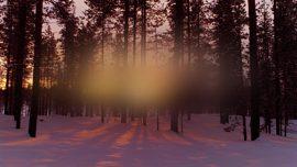 New Beginning Forest