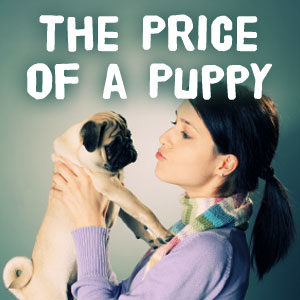 The Price of a Puppy