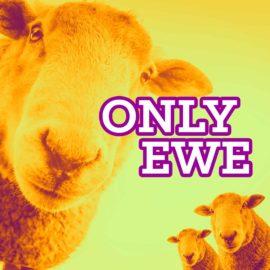 Only Ewe thumbnail