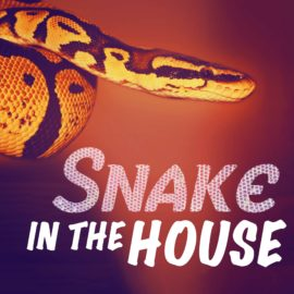 Snake In The House thumbnail