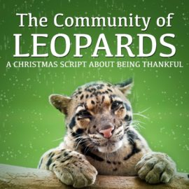 The Community of Leopards thumbnail