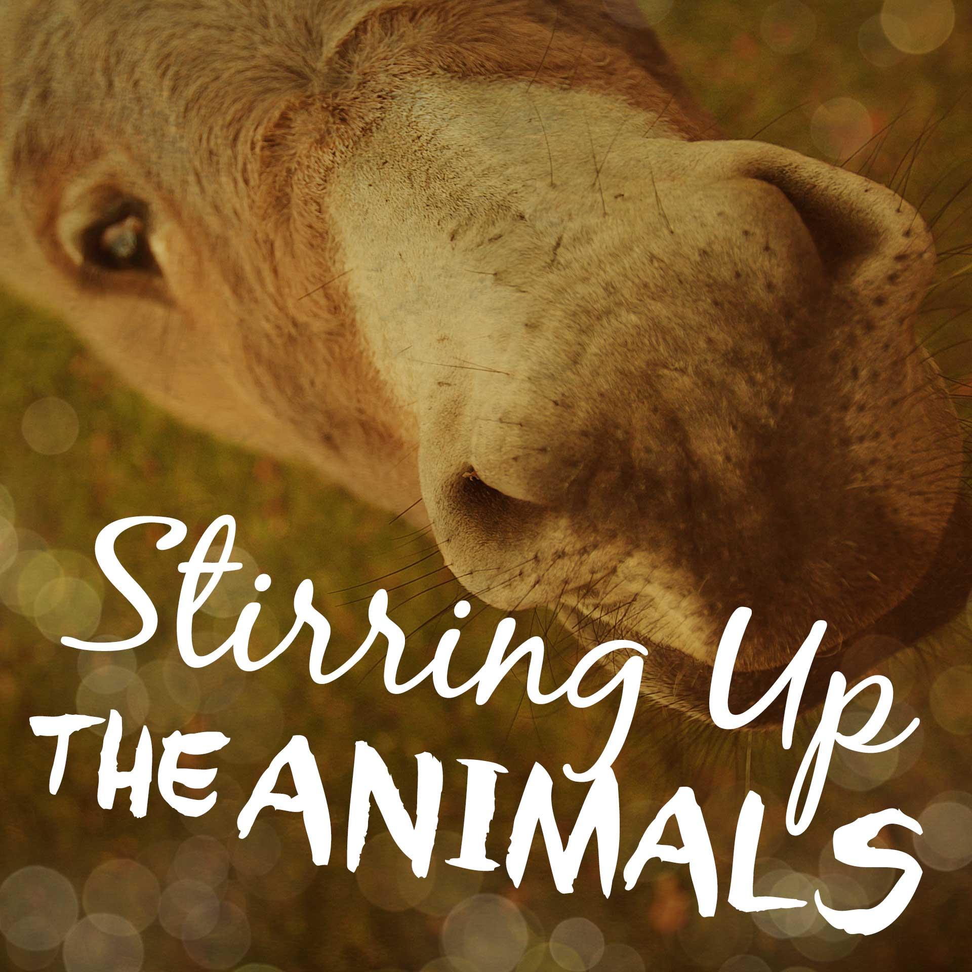 Stirring Up The Animals