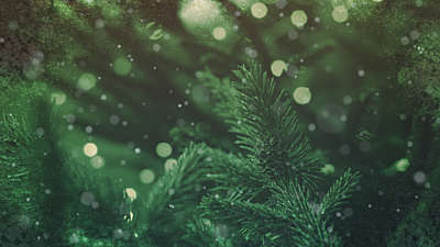 Christmas Cheer Evergreen
