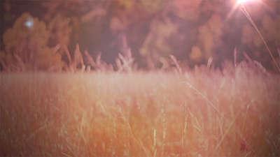 Fall Field 10