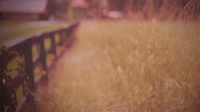 Fall Field 1