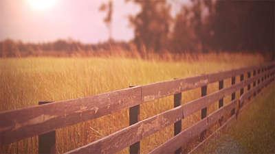 Fall Field 4