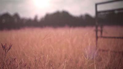 Fall Field 7